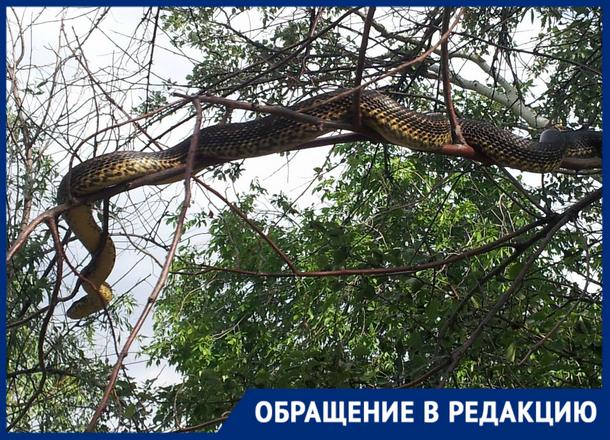 «Вот это шланг!»: огромная змея напугала новочеркасцев возле ГРЭС
