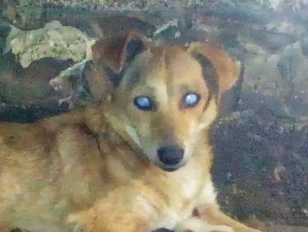 Слепая собака вот уже несколько лет живет в новочеркасском приюте