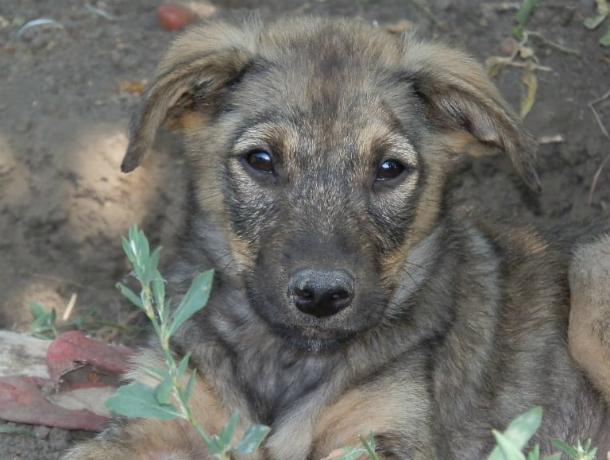 Робкий, но добродушный пес поселился в новочеркасском приюте «DogHope»