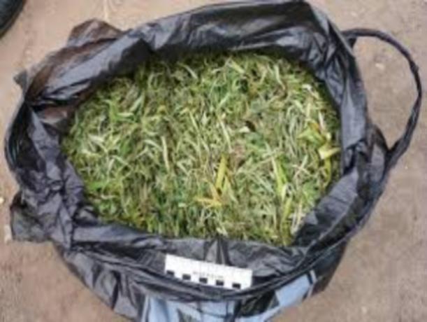 Жителю Воронежской области «светит» 10 лет захранение марихуаны