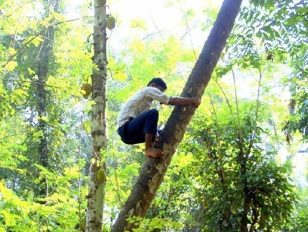 11-летний ребенок застрял на высоком дереве в Новочеркасске