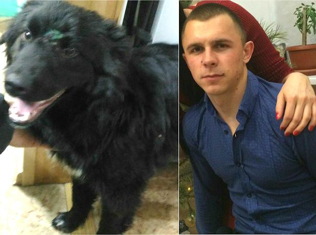Расстрелянный живодерами в Новочеркасске пес сам выбежал к своему спасителю после операции