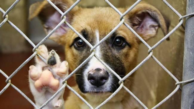 ФАС отменила торги на отлов бездомных животных в Новочеркасске