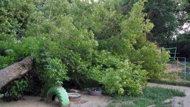Огромное дерево рухнуло на детскую площадку в Новочеркасске