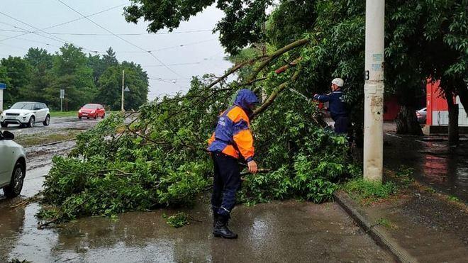 В Новочеркасске во время непогоды упали несколько аварийных деревьев
