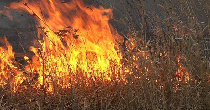 В Новочеркасске произошел крупный ландшафтный пожар