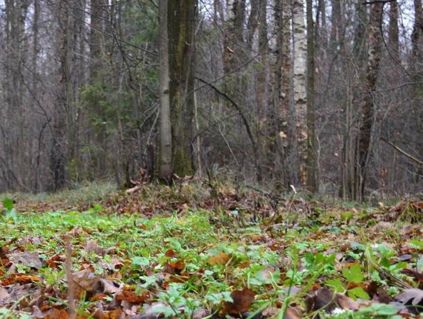 Родители, похоронившие двухлетнюю девочку в лесополосе, под Новочеркасском, до сих пор не найдены
