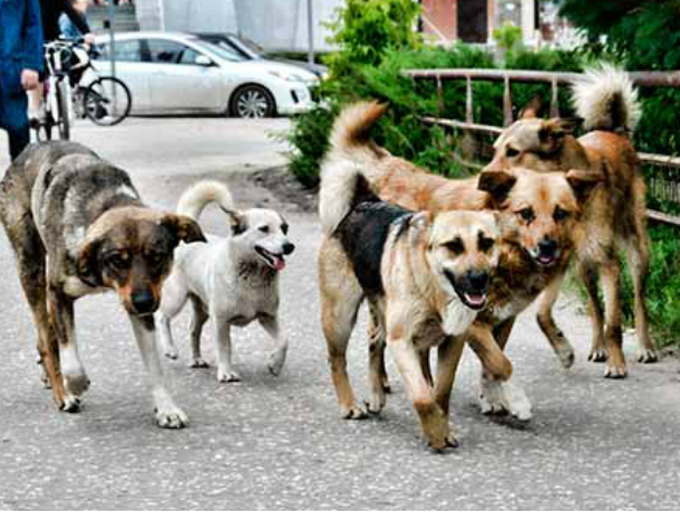 Администрация Новочеркасска прокомментировала ситуацию с покусанной бездомным псом девочкой