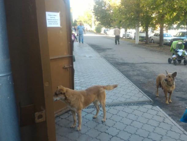 Новочеркасский микрорайон Черемушки заполонили стаи бродячих псов
