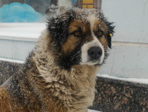 Самая знаменитая собака Новочеркасска наконец обрела дом