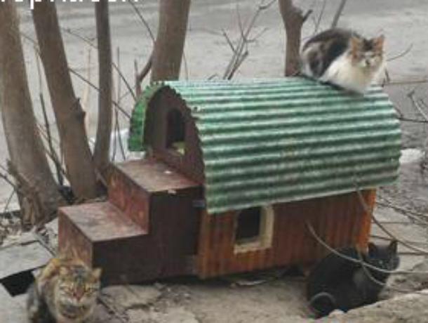 «Кошкин дом» похитили! В Новочеркасске кто-то позарился на домик для кошек