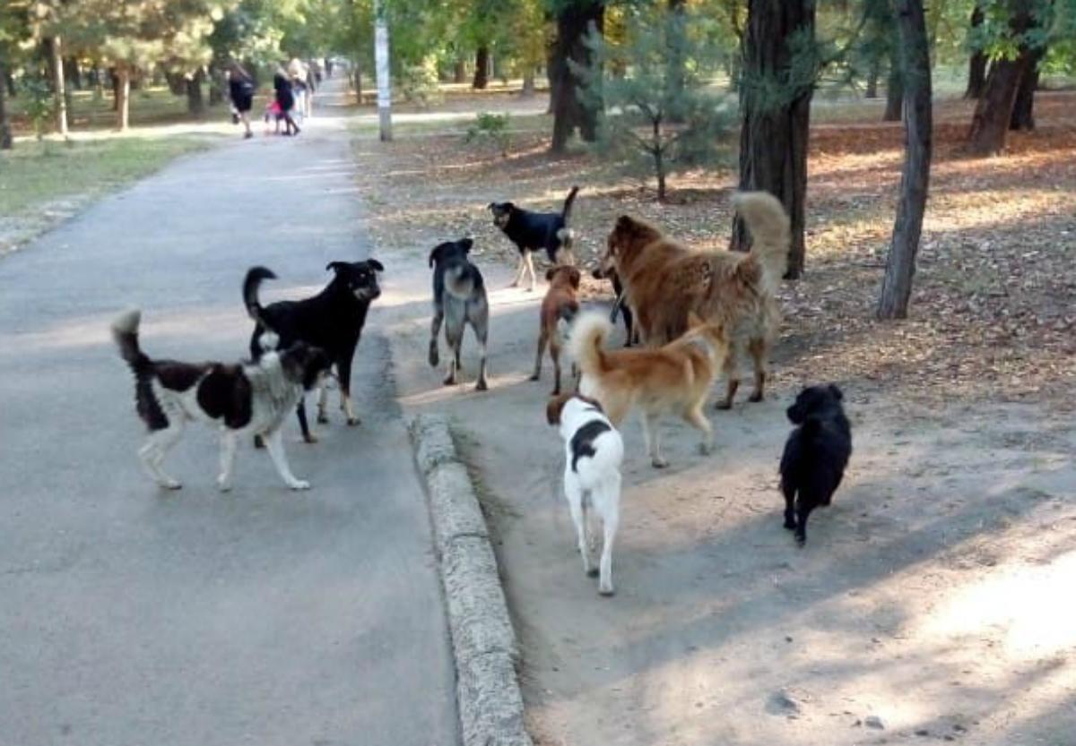 Администрация Новочеркасска ответила на «собачий вопрос»