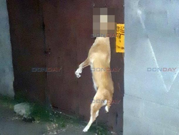 В Новочеркасске зверски убитую собаку повесили на воротах частного дома